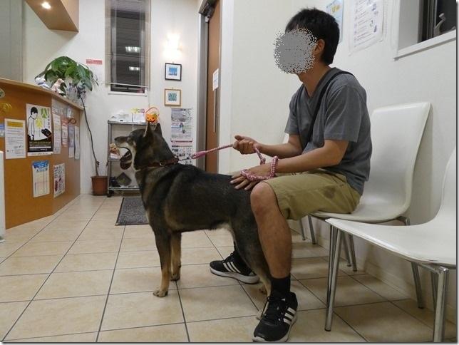 20180918桃太狂犬病予防-08