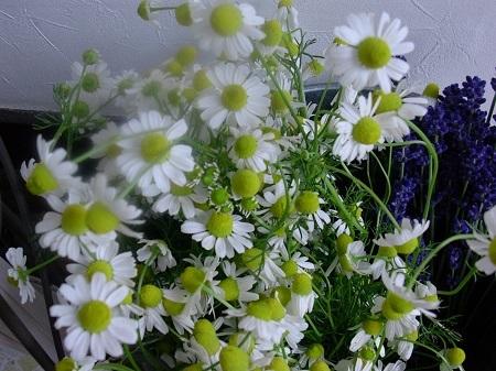 herbthelapy_20180910165920c7e.jpg