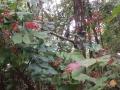 遊びの森08