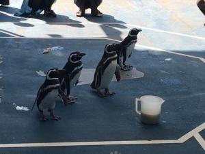 noto_penguin.jpg