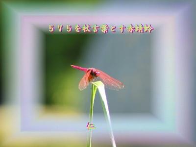 『 575を杖言葉とす赤蜻蛉 』物真似575秋zrq0704