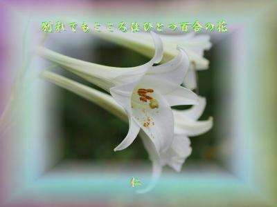 『 別れてもこころはひとつ百合の花 』つれづれ575zrr3109