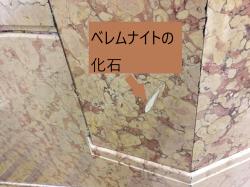 日本橋高島屋 ベレムナイトの化石