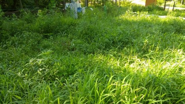 ジャガイモ畑0811