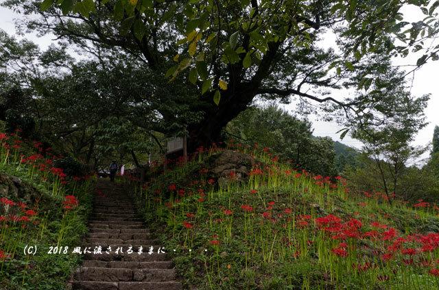 奈良・佛隆寺(仏隆寺) 彼岸花 2018年9月17日撮影 2