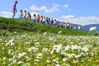 5091-340ソバの花