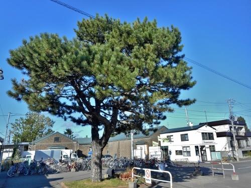 JR篠路駅東口 マツの木 高見倉庫