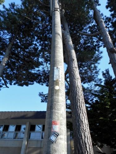 小野幌小学校 電柱