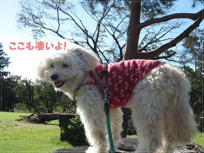 台風の公園4