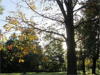 公園も紅葉1