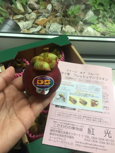 2mangoIMG_8414.jpg