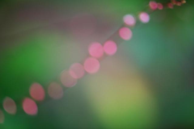 ミズヒキの玉ぼけ画像-01