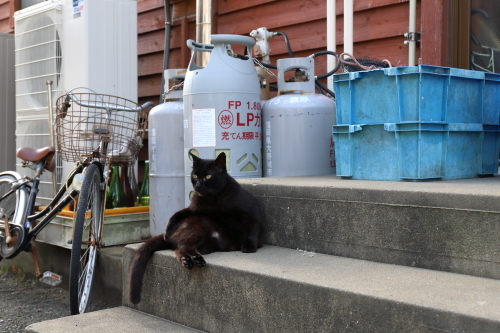階段に黒猫