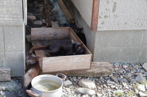 黒猫います