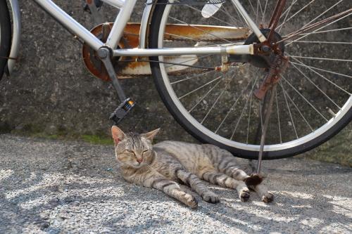 自転車の陰