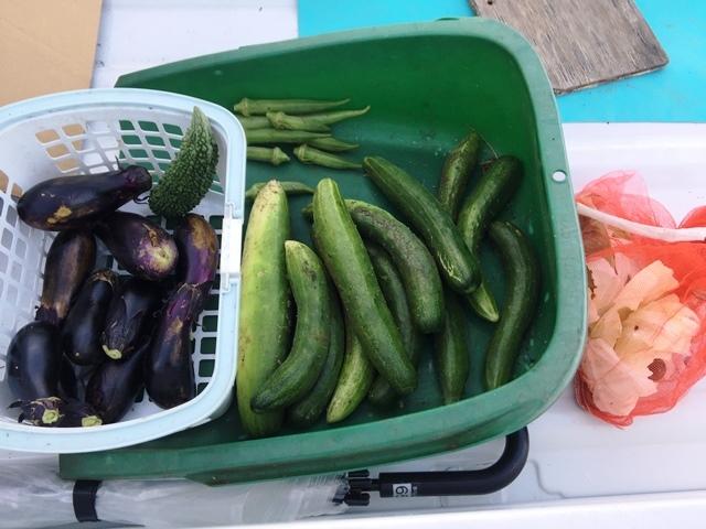 今日の収穫+カタツムリ