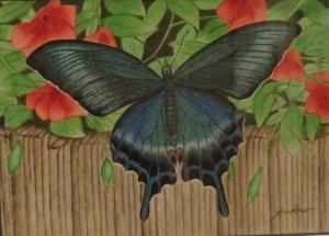 カラスアゲハ蝶