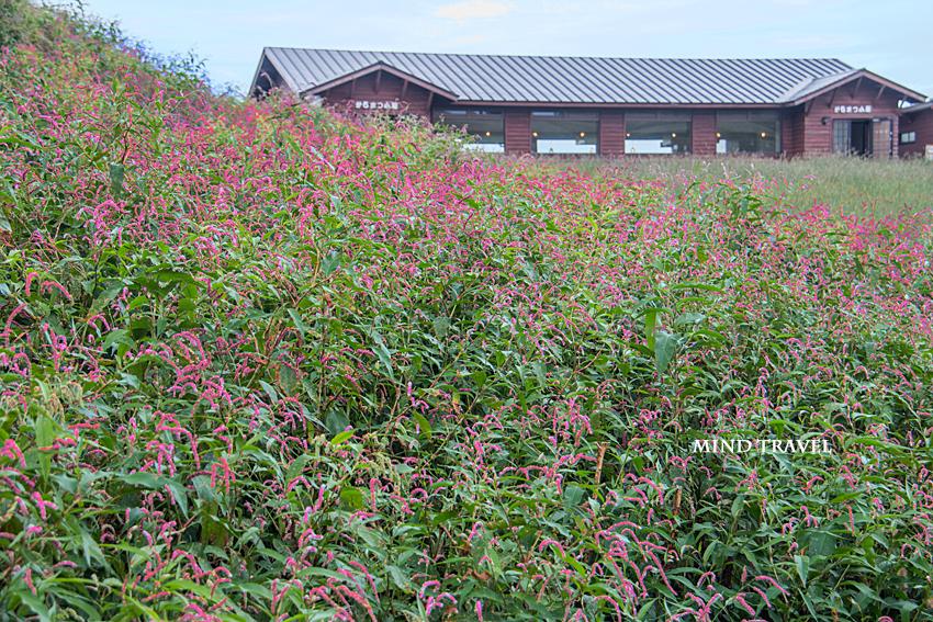 箱館山 野草
