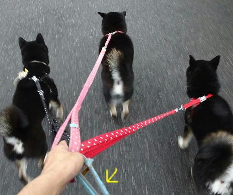 4ワン散歩