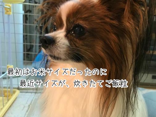 9_f_7EKD20180818-4.png