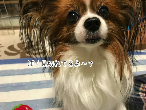 Ox99IWPU20180913-1.png