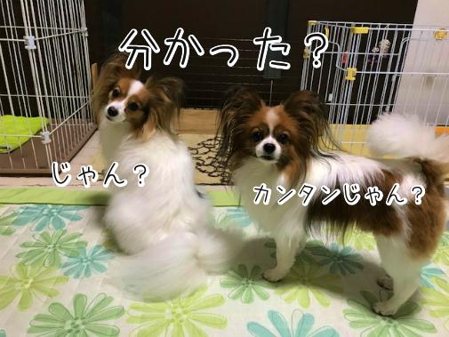 PuyEJ1FU20180907-4.png