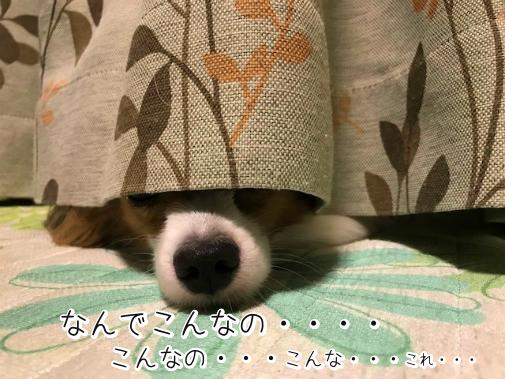 TQzIMKom20180821-8.png