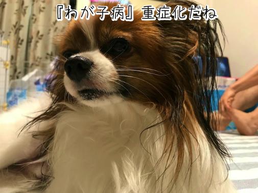 xAXvGP_c20180915-2.png