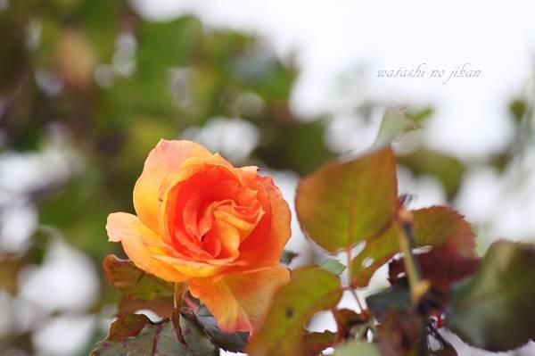 flower20190920.jpg