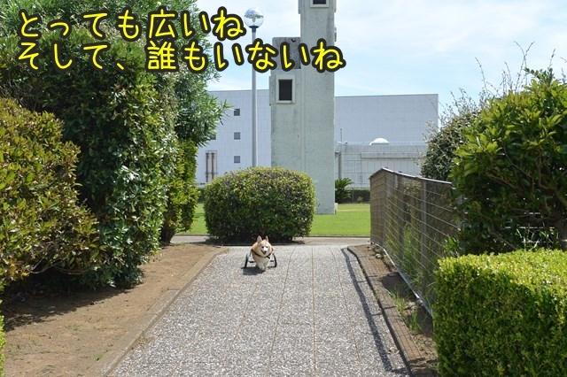a-DSC_0014.jpg