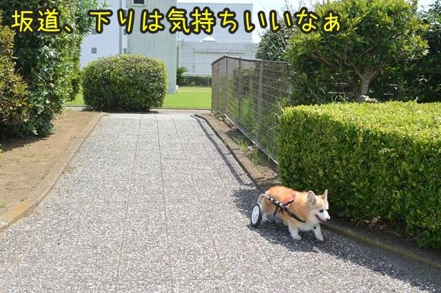 a-DSC_0015.jpg
