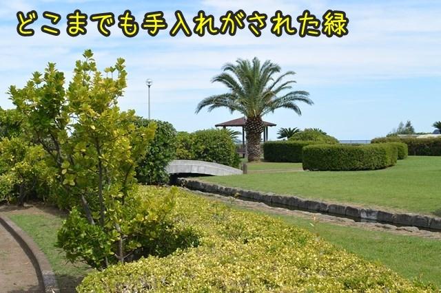 a-DSC_0025.jpg