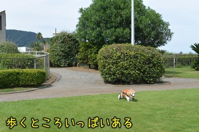 a-DSC_0056.jpg