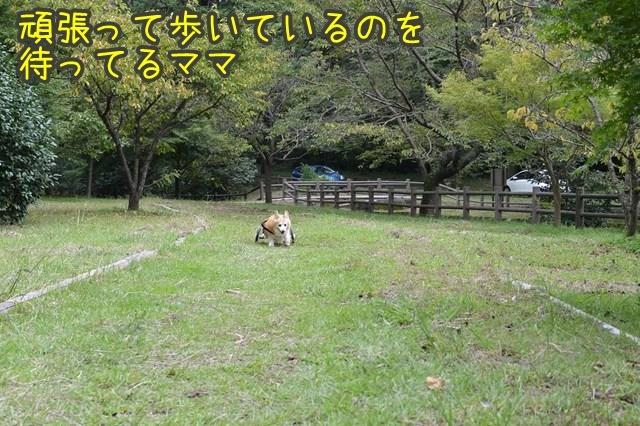a-DSC_0157.jpg