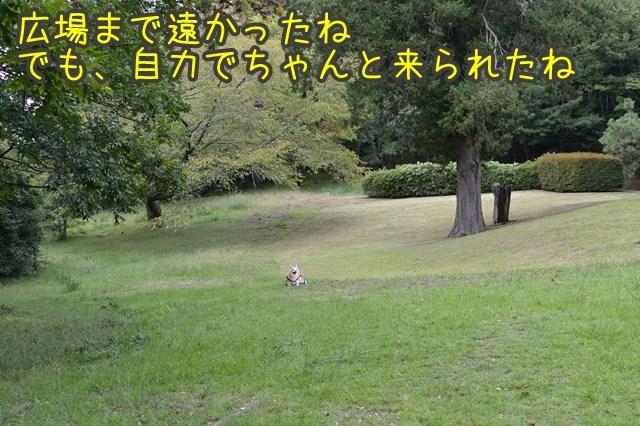 a-DSC_0180.jpg