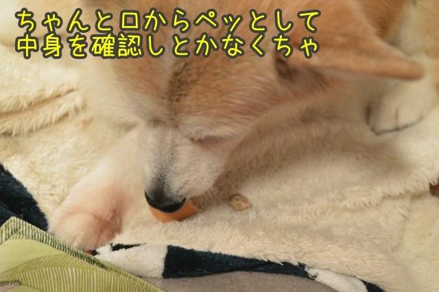 a-DSC_0235.jpg