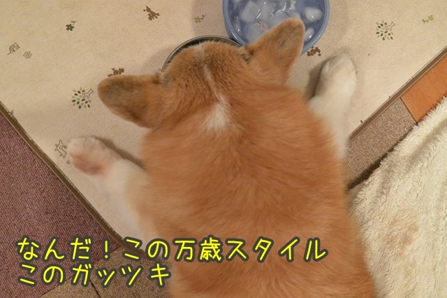 a-DSC_0243.jpg