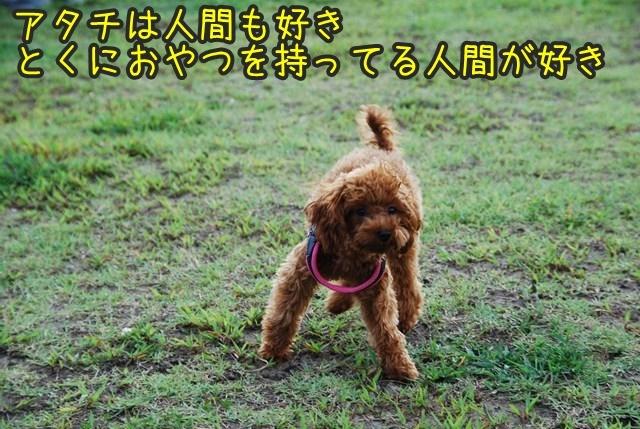 a-DSC_6849.jpg
