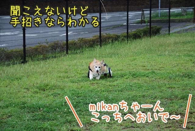 a-DSC_6874.jpg
