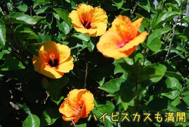 a-DSC_6934.jpg