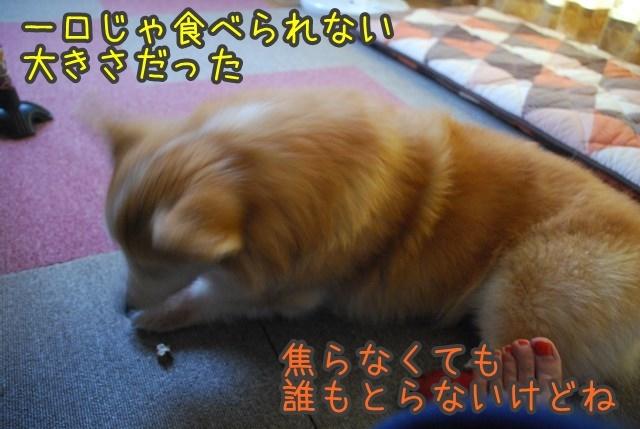 a-DSC_7057.jpg