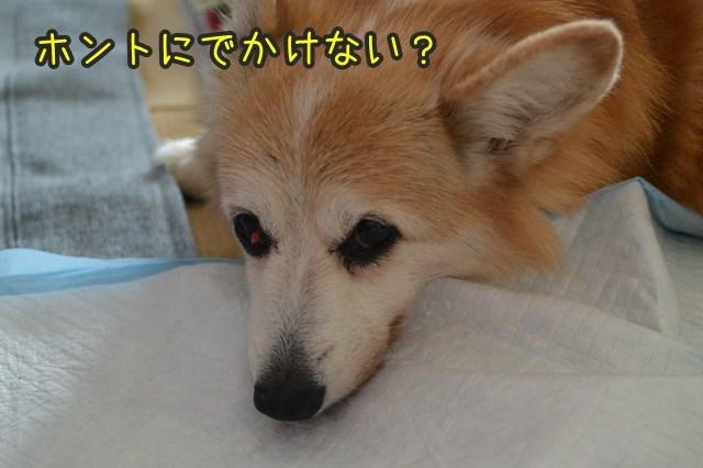 a-DSC_9854.jpg