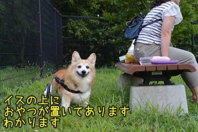 a-DSC_9883.jpg