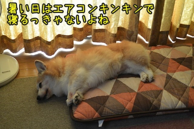 a-DSC_9990.jpg