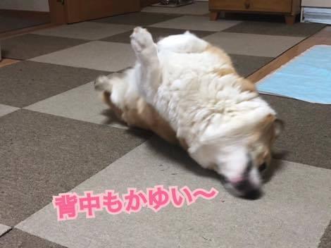 th_IMG_6605.jpg