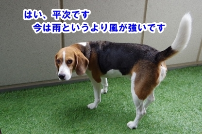 台風 00