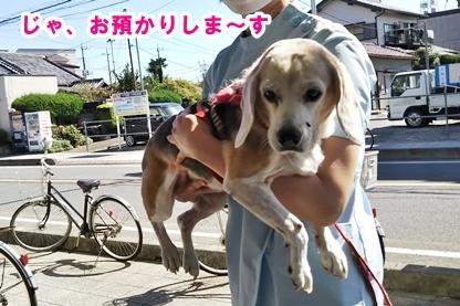 犬ドック 6