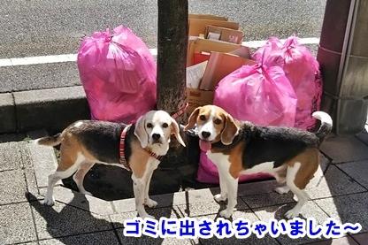 犬ドック 1