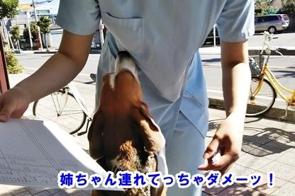 犬ドック 2