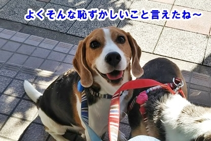 犬ドック 3